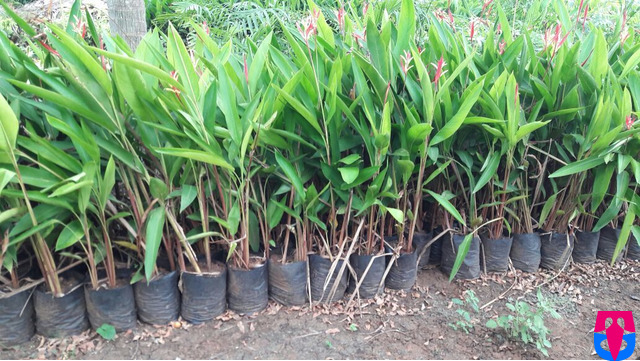 VijayaHamsa Nursery Gardens