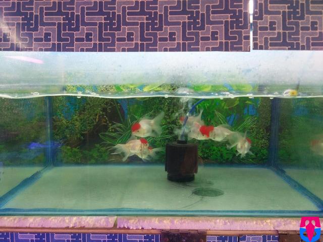 ANU Fish AQUARIUMS