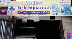 Fish Aquarium Shop