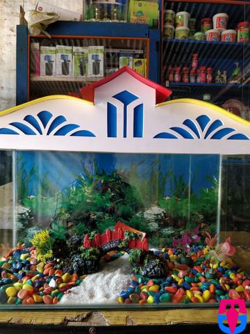 Fish Aquarium Shop