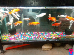 Madina Aquarium