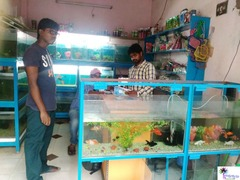 Kan's Aquarium Bhimavaram